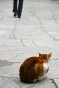 cat in a mosque