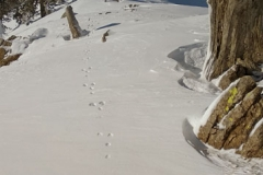 lost first tracks to a rabbit, Vasilitsa, Greece