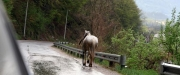 a horse taking himself for a walk, somewhere around Plav