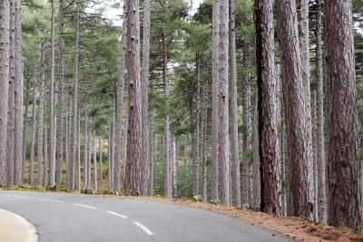 forêt communale between Vezanni & Vivario