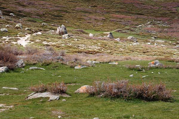 Trail from bergeries de Capelaccia down to vallée de Tavignano