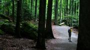 ...deep, dark woods