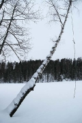 something tells me this swing won\'t be used for a while, Sorvanen lake near Lahti