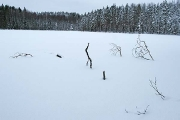 submerged and snow covered fallen tree in Sorvanen lake near Lahti