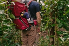 anti-jetlag hike through Iao Valley jungle ©Jonna