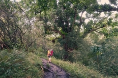 6.5km & 200 v.m. on muddy Pipiwai trail, Kipahulu, ©Jonna