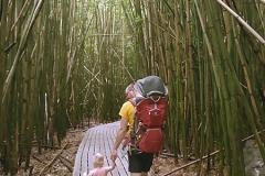 Pipiwai trail bamboo forest, Kipahulu, ©Jonna
