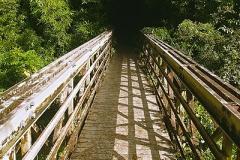 Pipiwai trail bamboo forest entrance, Kipahulu