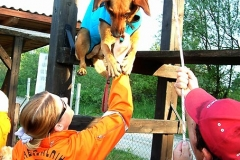 Canine Search & Rescue