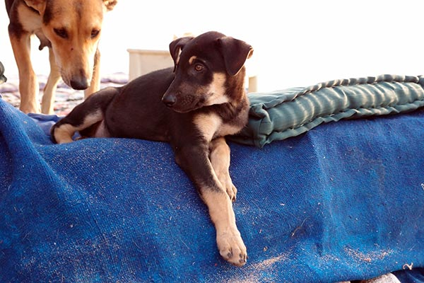 dog family no. 2 & 3