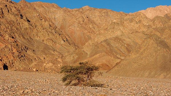 Wadi Shahira, Dahab
