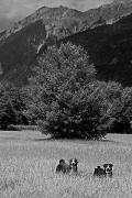 Gailtal, Jul.28th ©Jonna