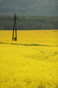 somewhere in western Hungary, Apr.12
