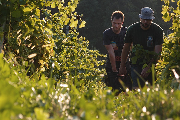 wherever you go it's always uphill @ Zlatolas grape harvest, Zibika, Sep.12th ©Jonna
