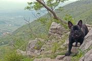 Max went climbing, Vipava Apr.26th, ©Jonna