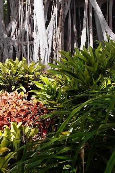 Jardín de Aclimatación de la Orotava, ©Jonna