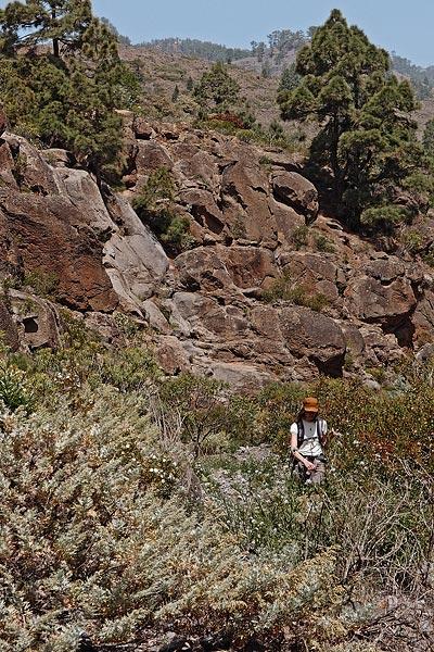 Arico arriba, Barranco de los Albarderos