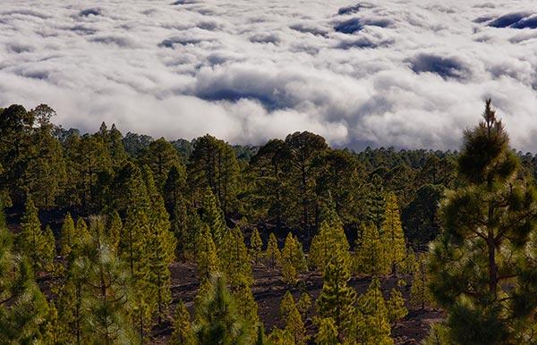 Parque Nacional del Teide, ©Jonna
