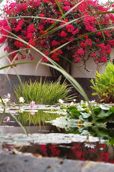 Jardín de Aclimatación de La Orotava, Puerto de la Cruz, ©Jonna
