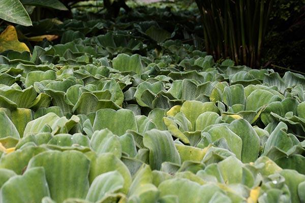 Jardín de Aclimatación de La Orotava, Puerto de la Cruz