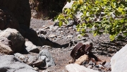 remains of a quarry in Barranco de los Albarderos, Villa de Arico