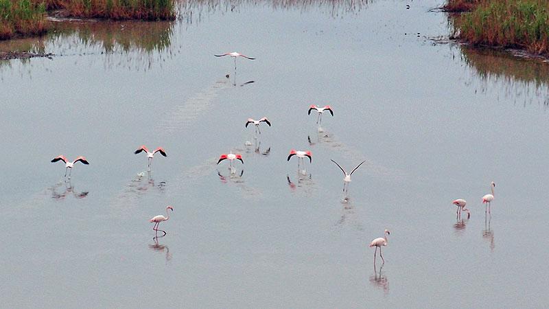 flamingos!?! @Marina di Ravenna