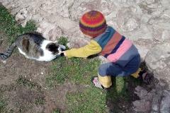 animals roam free ©Jonna