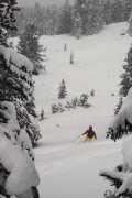 Running trees in heavy snow, Zillertal Arena, ski day #7, Jan 30th