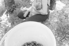 blueberries, strawberries, raspberries... Jun.11th